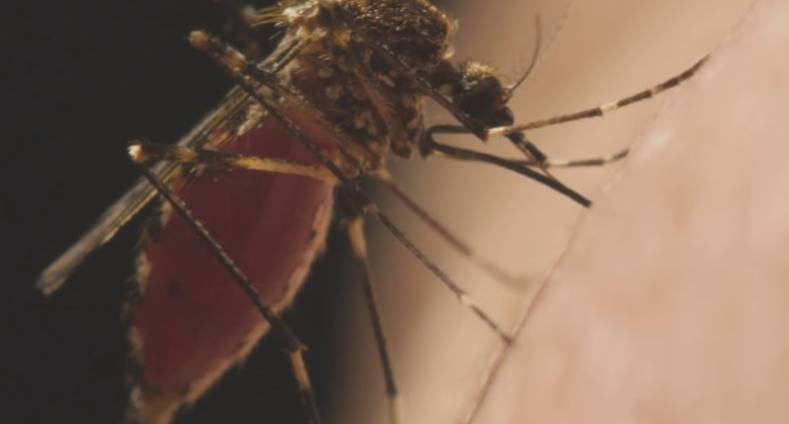 Mosquito from the Jansen Media distributed video,