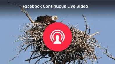 One early application of the Facebook Live API was used by Explore.org to feature an eagle's nest. Source: Explore.org.