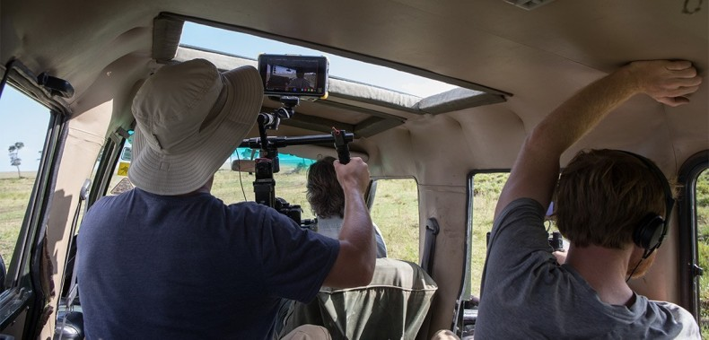 Filming big cats from the safety of an 4WD.