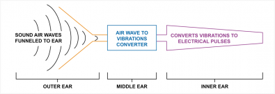 Diagram 1 – A schematic of the main components of the human hearing system. The function of the ear is to turn sound-air-waves into electrical impulses for the brain to process.